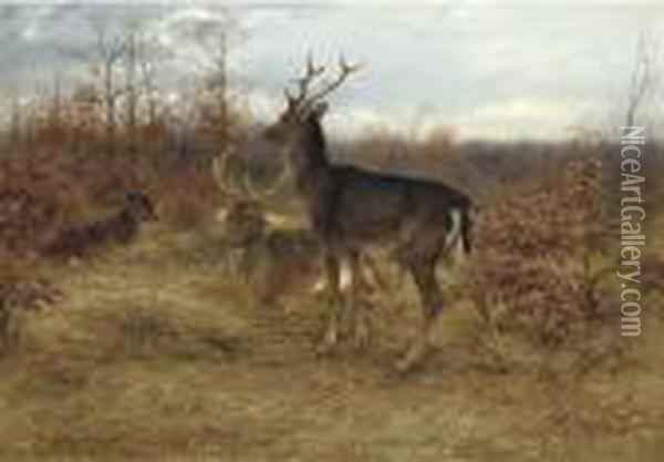 Three Stags In A Woodland Oil Painting - Rosa Bonheur