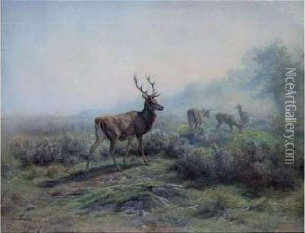 The Deer, Morning Effect (les Cerfs, Effet Du Matin) Oil Painting - Rosa Bonheur