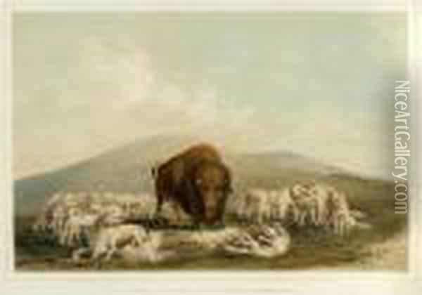 Buffalo Hunt, White Wolves Attacking A Buffalo Bull Oil Painting - George Catlin