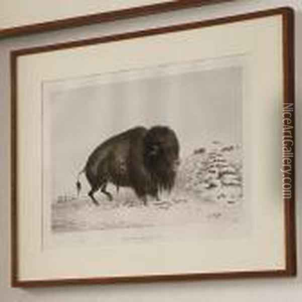 Wounded Buffalo Bull Oil Painting - George Catlin