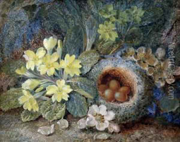 Still Life Of A Primrose, Birds Nest And Apple Blossom Oil Painting - Vincent Clare