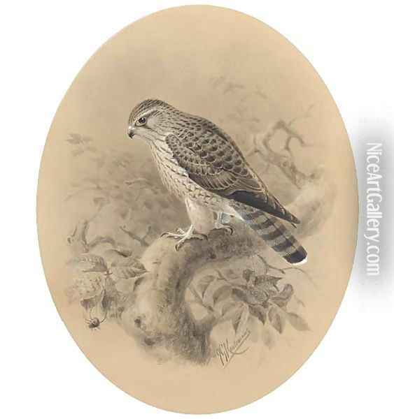 A merlin on a branch Oil Painting - Johan Gerard Keulemans