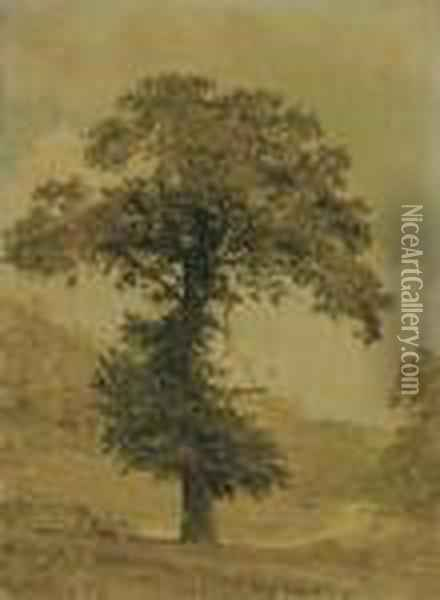 Study Of A Tree Oil Painting - Jasper Francis Cropsey