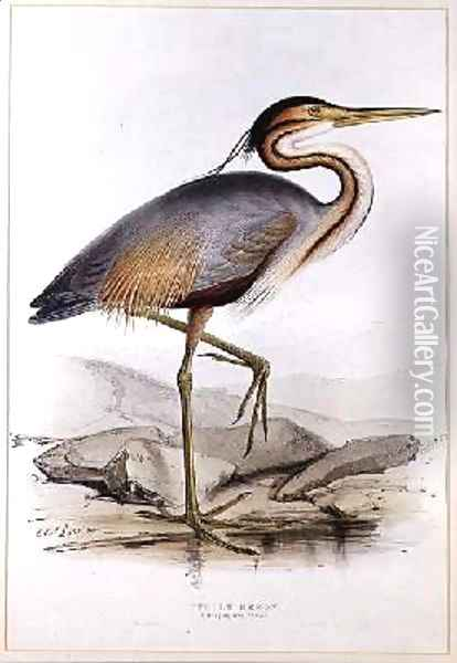 Purple Heron Oil Painting - Edward Lear