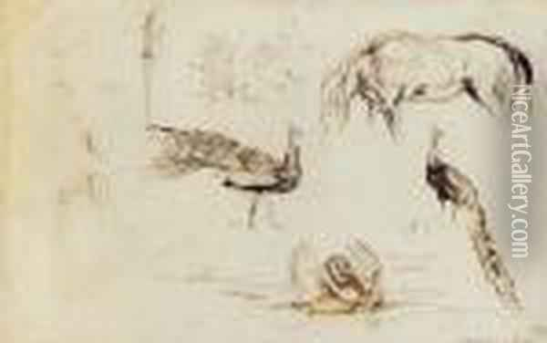 A Sheet Of Studies Of Peacocks, A Swan And A Horse Oil Painting - Eugene Delacroix