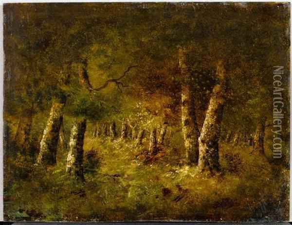Study Of A Forest Oil Painting - Narcisse-Virgile D Az De La Pena