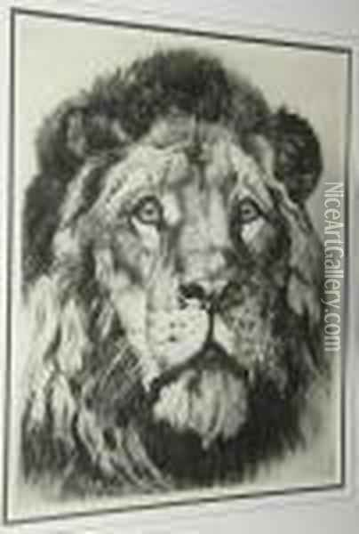Large Study Of A Lion's Head Oil Painting - Herbert Thomas Dicksee