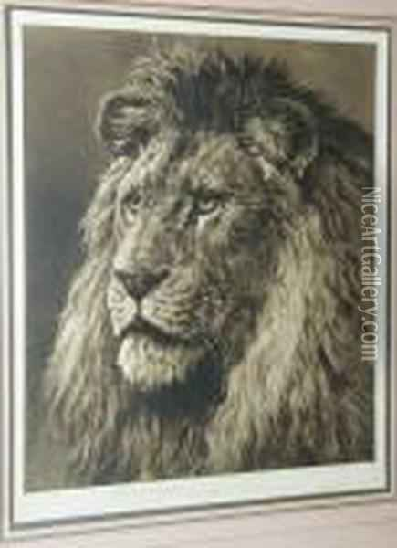 Study Of A Lion's Head Oil Painting - Herbert Thomas Dicksee