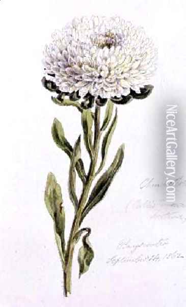 China Aster Oil Painting - William James Linton