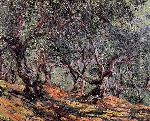 Olive Trees In Bordighera Oil Painting - Claude Oscar Monet