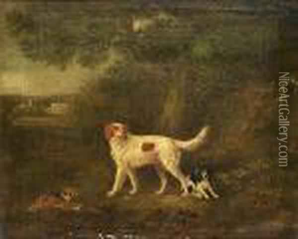 A Red And White Setter With 