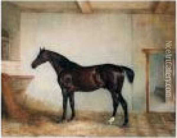 A Bay Hunter In A Loose Box Oil Painting - John Snr Ferneley