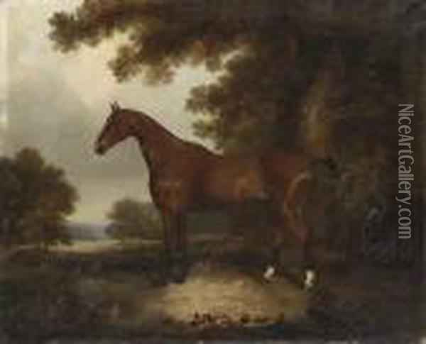 A Bay Hunter In A Wooded Landscape Oil Painting - John Snr Ferneley