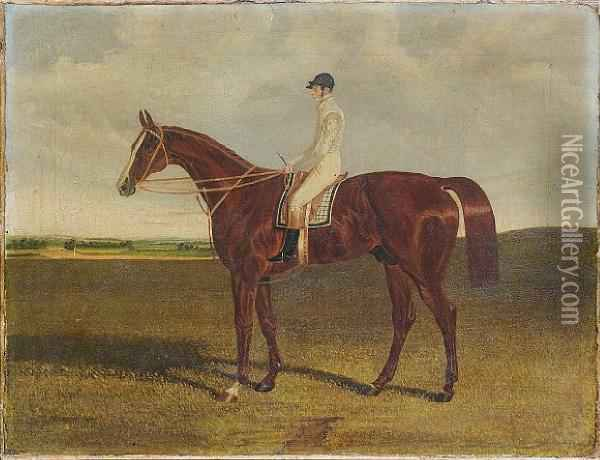 A Bay Racehorse With Jockey Up Oil Painting - John Frederick Herring Snr