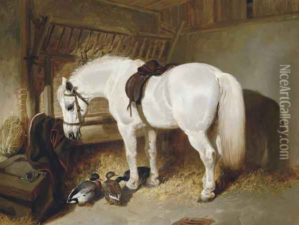 A Grey Pony In A Stable With Ducks Oil Painting - John Frederick Herring Snr