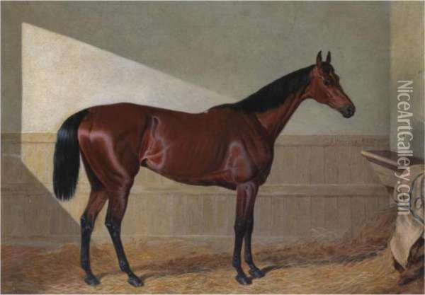 Beeswing , A Dark Bay Racehorse, In A Stable Oil Painting - John Frederick Herring Snr