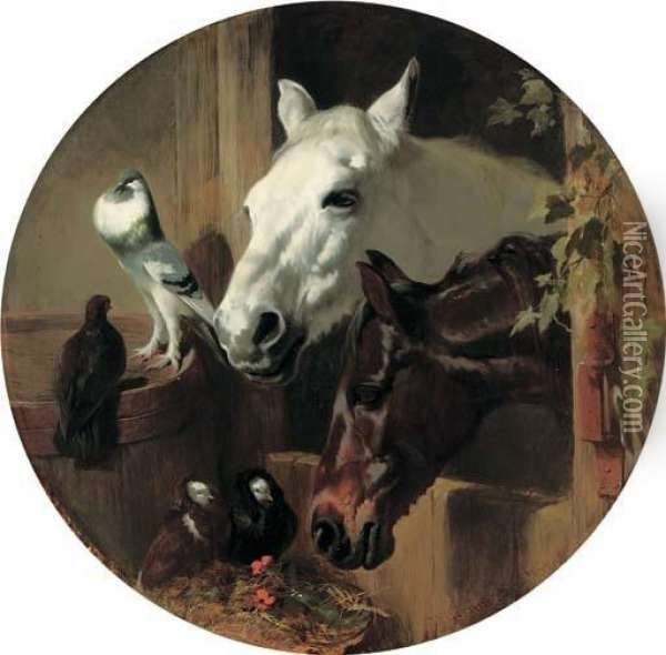 A Grey And A Dark Bay Through A Stable Door With Pigeons Oil Painting - John Frederick Herring Snr