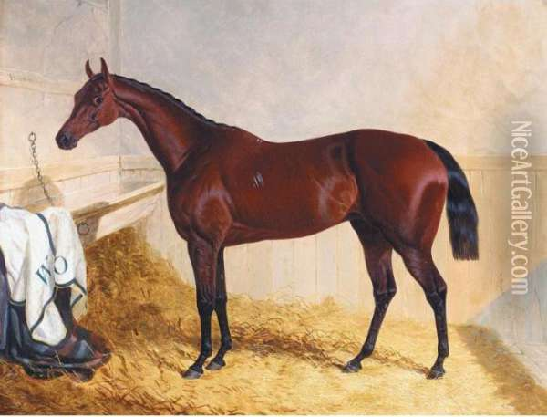 Mr William Orde's Bay Filly Bees-wing In A Loose Box Oil Painting - John Frederick Herring Snr