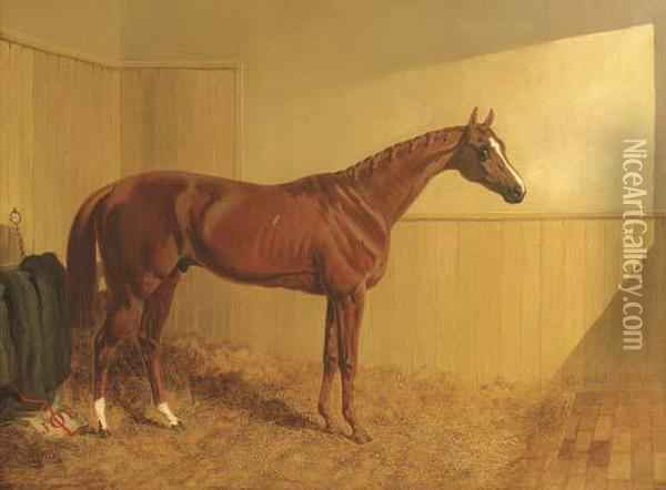 Mr. J. Dawson's Grimston, A Chesnut Racehorse In A Stable Oil Painting - John Frederick Herring Snr