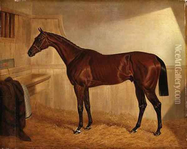 Lord Jersey's Bay Middleton In A Stable Oil Painting - John Frederick Herring Snr