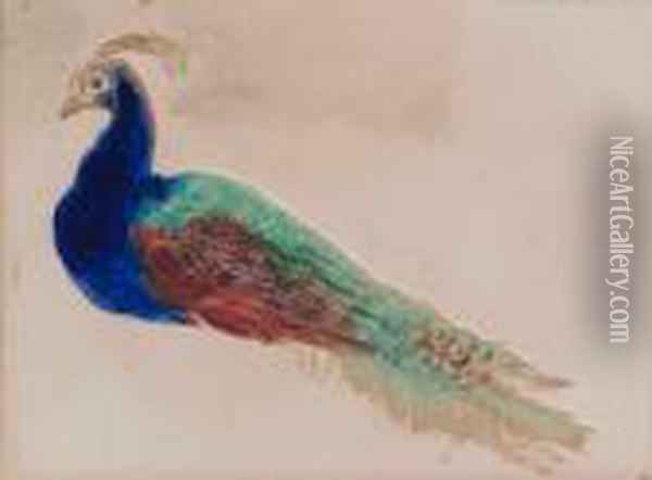 Study Of A Peacock Oil Painting - William Henry Hunt