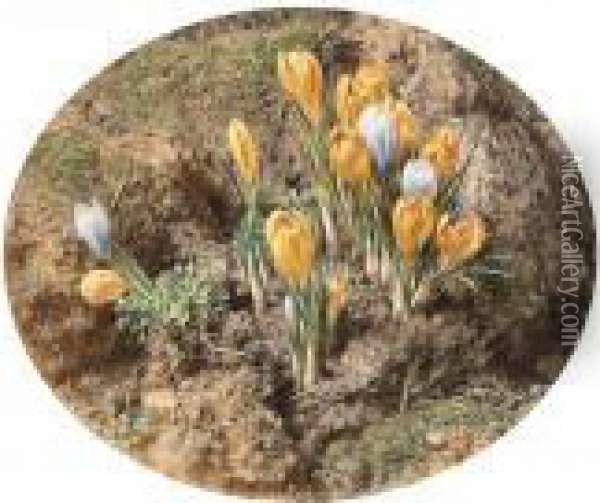 Crocuses Growing On A Mossy Bank Oil Painting - William Henry Hunt