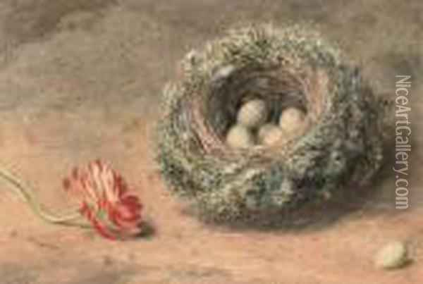 Still Life Of A Bird's Nest And Tulip Oil Painting - William Henry Hunt
