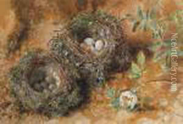 Still Life With Birds' Nests Oil Painting - William Henry Hunt