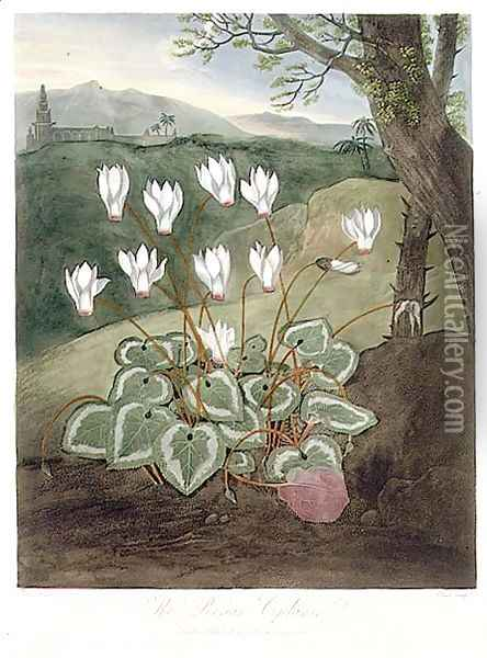 The Persian Cyclamen, engraved by Elmes, from The Temple of Flora by Robert Thornton, pub. 1804 Oil Painting - Abraham Pether