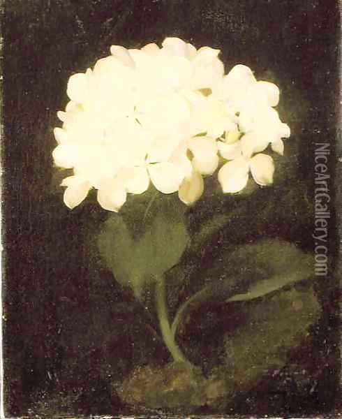 White Hydrangea Oil Painting - James Stuart Park