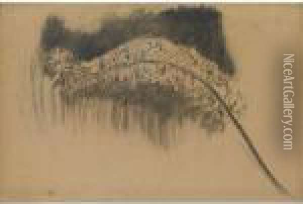 Foxtail Lily : Study V Oil Painting - Piet Mondrian