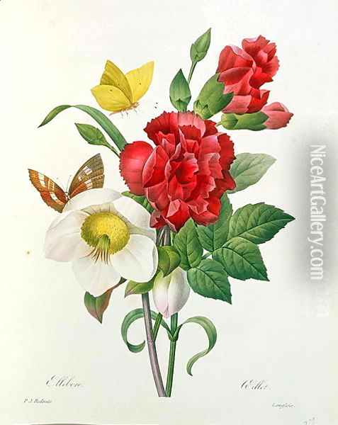 Christmas Rose, Helleborus niger and Red Carnation with Butterflies, from Les Choix des Plus Belles Fleurs by Pierre Redoute 1759-1840 Oil Painting - Pierre-Joseph Redoute