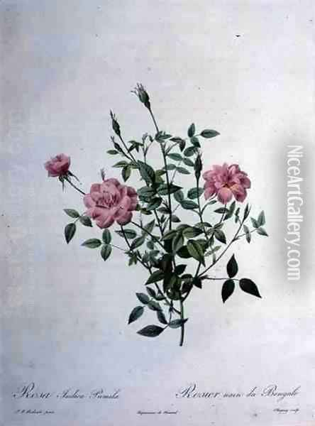Rosa indica pumila dwarf Bengal rose, engraved by Chapuy, from Les Roses, 1817-24 Oil Painting - Pierre-Joseph Redoute