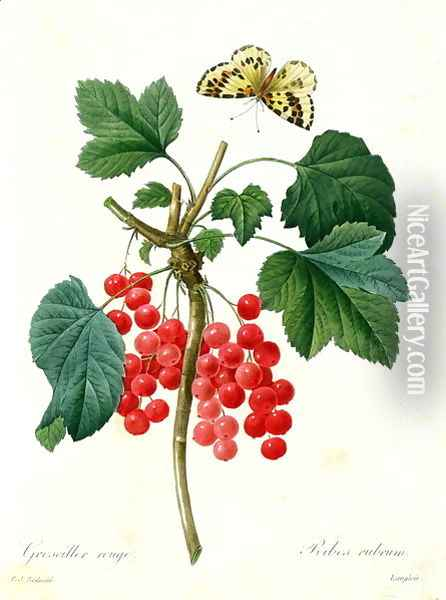 Currants Red, by Pierre Joseph Redoute 1759-1840 pub. by Langois Oil Painting - Pierre-Joseph Redoute