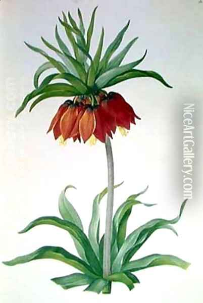 Crown Imperial I Oil Painting - Pierre-Joseph Redoute