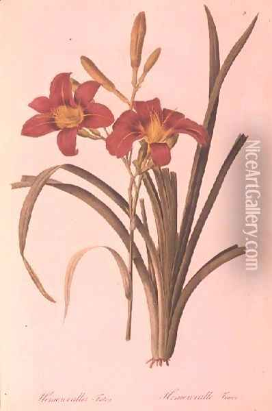 Hemerocallis fulva lily, from Les Liliacees, 1808-16 Oil Painting - Pierre-Joseph Redoute