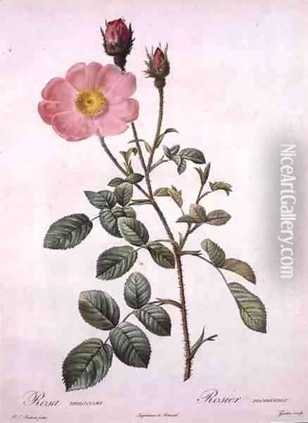 Rosa muscosa moss rose, engraved by Gouten, from Les Roses, 1817-24 Oil Painting - Pierre-Joseph Redoute