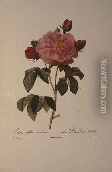 Rosa Gallica Aurelianensis or the Duchess of Orleans from, Les Roses, 1821 Oil Painting - Pierre-Joseph Redoute
