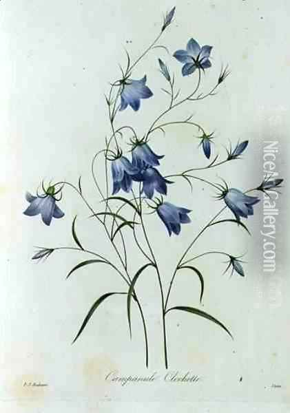 Campanula, engraved by Victor, from Choix des Plus Belles Fleurs, 1827-33 Oil Painting - Pierre-Joseph Redoute