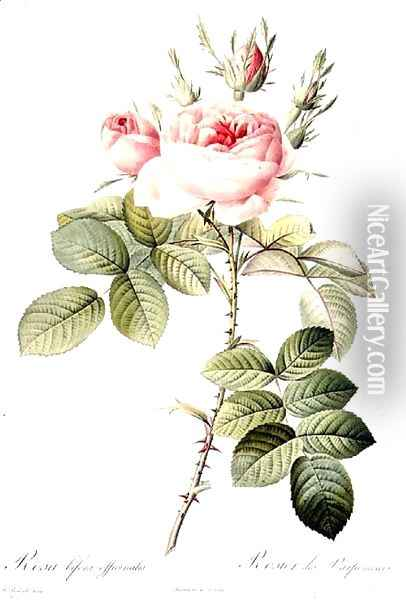 Rosa Bifera Officinalis, engraved by Langlois, published by Remond Oil Painting - Pierre-Joseph Redoute