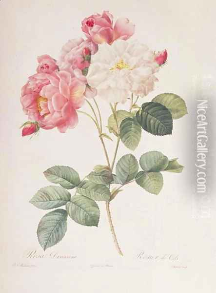 Rosa Damascena, from Les Roses, 1817 Oil Painting - Pierre-Joseph Redoute