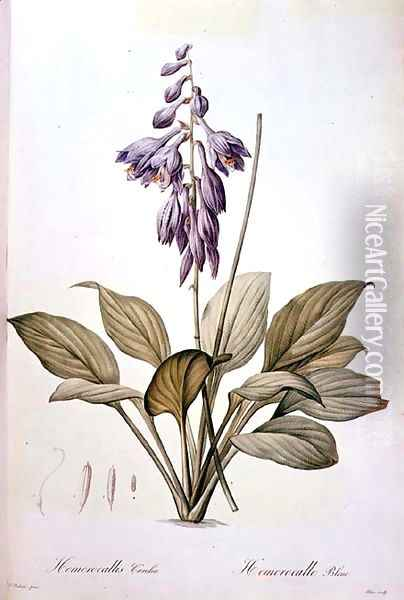 Plantain Lily Oil Painting - Pierre-Joseph Redoute