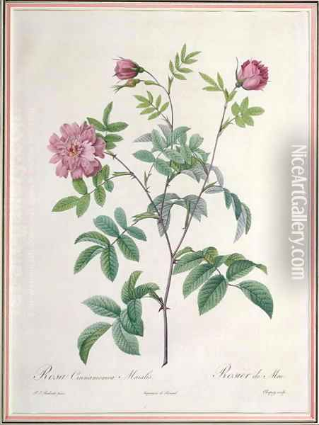 Rosa Cinnamomea Maialis, engraved by Chapuy, published by Remond Oil Painting - Pierre-Joseph Redoute