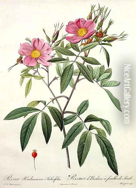 Rosa Hudsoniana Salicifolia, engraved by Langlois, published by Remond Oil Painting - Pierre-Joseph Redoute