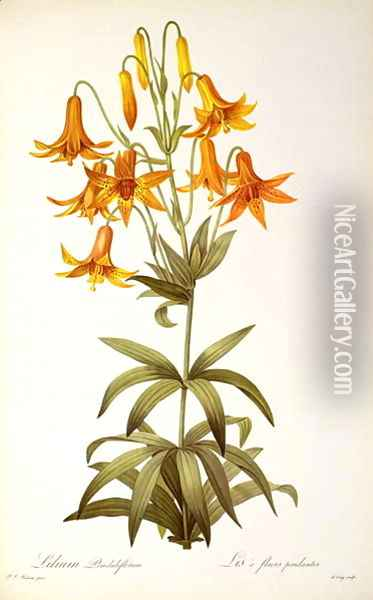 Lilium Penduliflorum, from Les Liliacees, 1811 Oil Painting - Pierre-Joseph Redoute