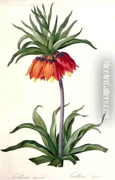 Fritillaria Imperialis from, Les Lilacees, 1802-8 Oil Painting - Pierre-Joseph Redoute