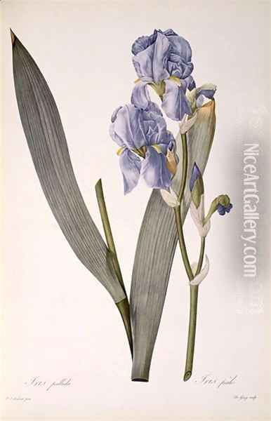 Iris Pallida, from Les Liliacees, 1812 Oil Painting - Pierre-Joseph Redoute