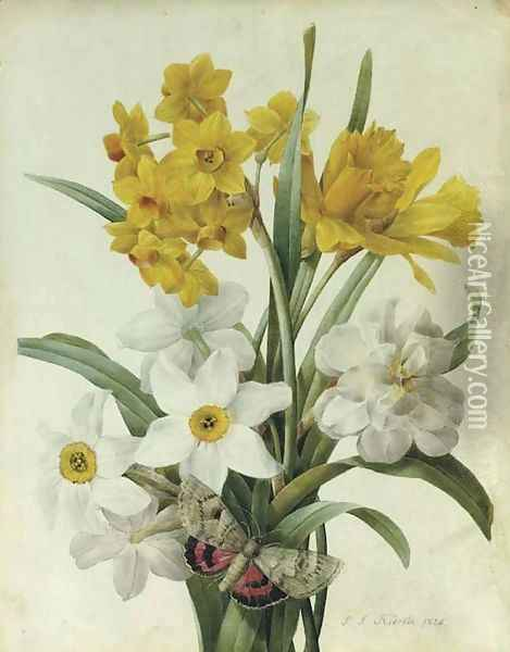 A bouquet of daffodils and narcissi with a red underwing moth Oil Painting - Pierre-Joseph Redoute