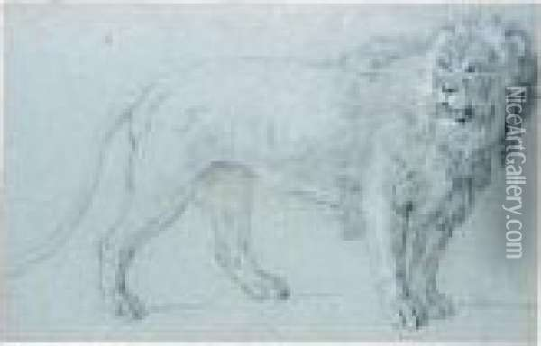 Study Of A Lion Oil Painting - Jean-Baptiste Oudry