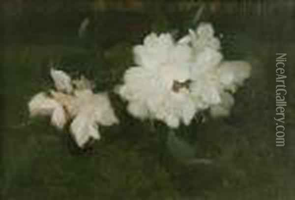 White Rhododendrons Oil Painting - James Stuart Park